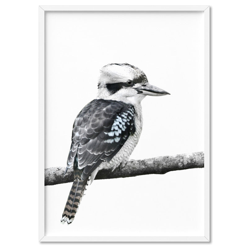 Kookaburra on Branch - Art Print