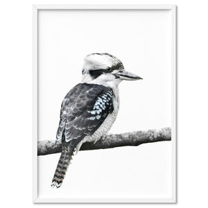 Kookaburra on Branch - Art Print, Stretched Canvas, or Framed Canvas Wall Art