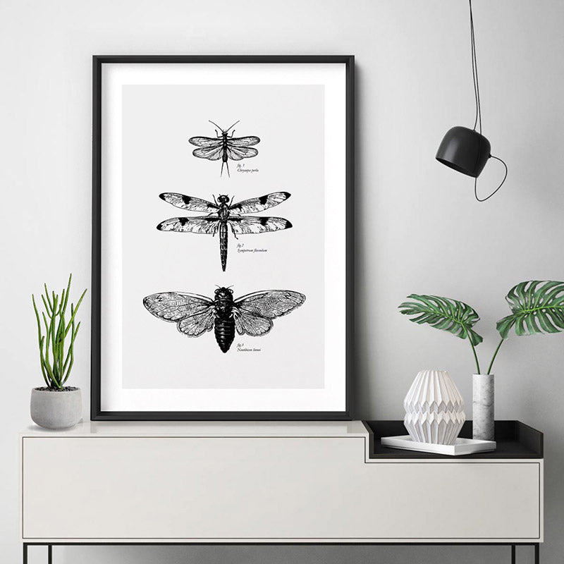 Winged Insects Entomology / Lacewing, Dragonfly & Cicada - Art Print, Stretched Canvas, or Framed Canvas Wall Art