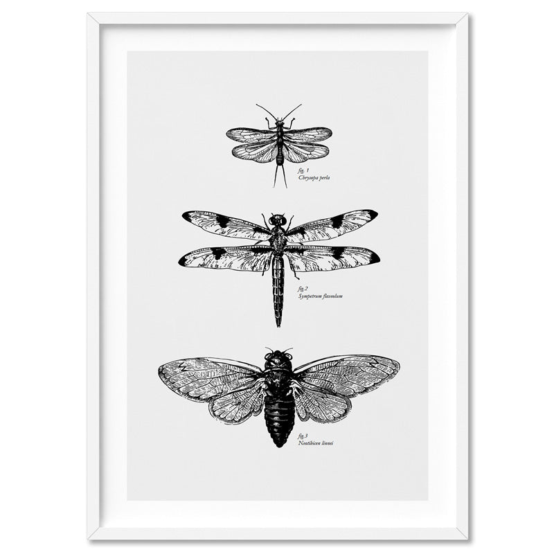 Winged Insects Entomology / Lacewing, Dragonfly & Cicada - Art Print