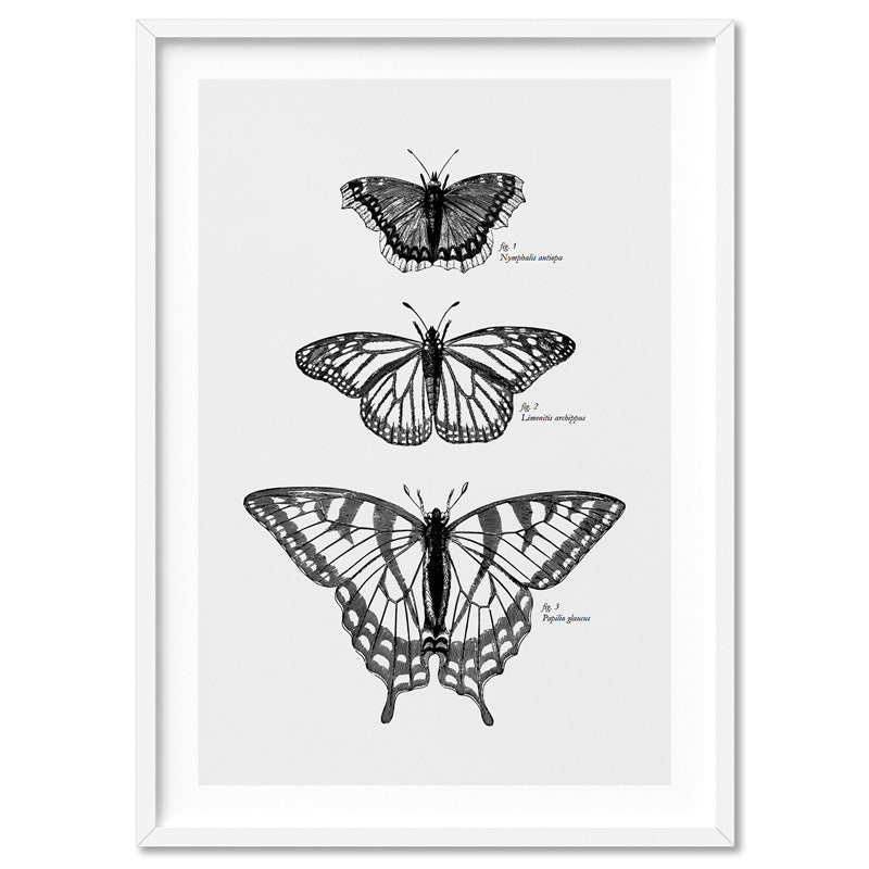 Butterflies Entomology / Mourning cloak, Viceroy & Eastern Tiger Swallowtail - Art Print