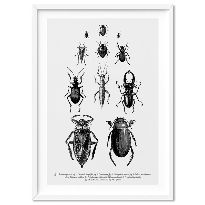 Bugs & Insects Entomology - Art Print