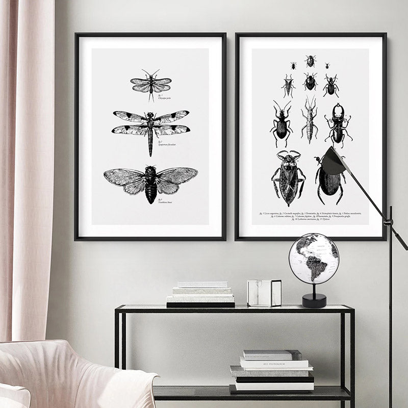 Bugs & Insects Entomology - Art Print, Stretched Canvas or Framed Canvas Wall Art, Shown framed in a room mockup