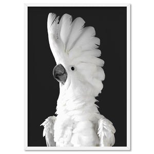 White Cockatoo on Charcoal Background - Art Print, Stretched Canvas, or Framed Canvas Wall Art