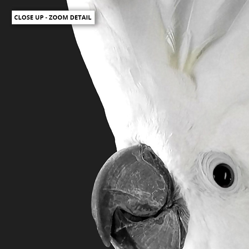 White Cockatoo on Charcoal Background - Art Print, Stretched Canvas or Framed Canvas Wall Art, Close up View of Print Resolution