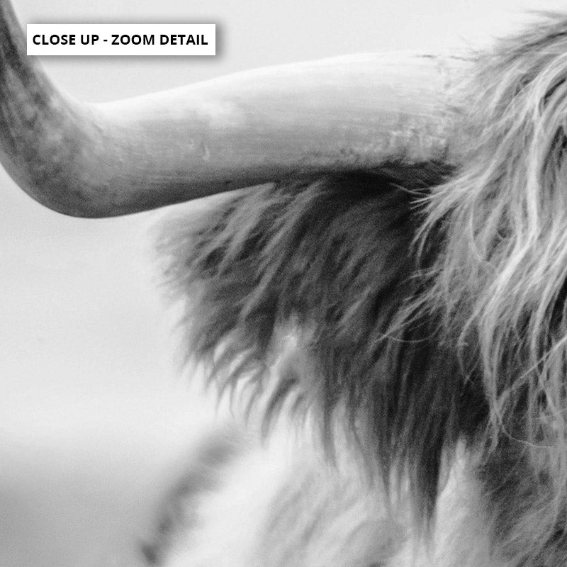 Highland Cow Portrait II B&W - Art Print, Stretched Canvas or Framed Canvas Wall Art, Close up View of Print Resolution