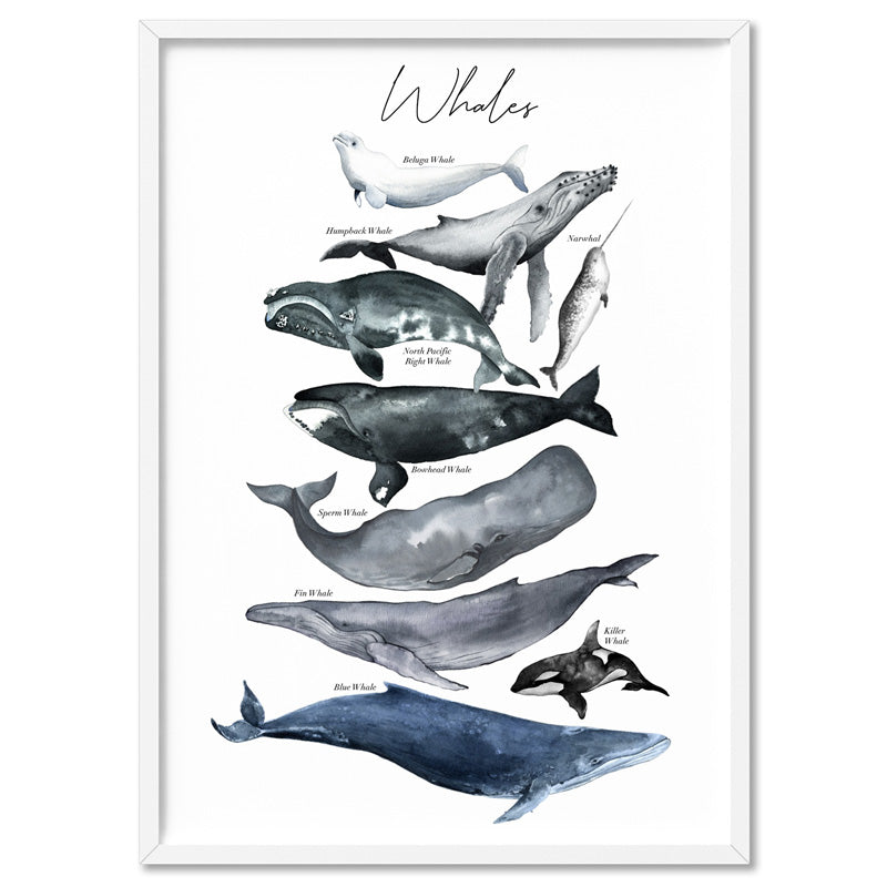Whales of The World Chart in Watercolour  - Art Print
