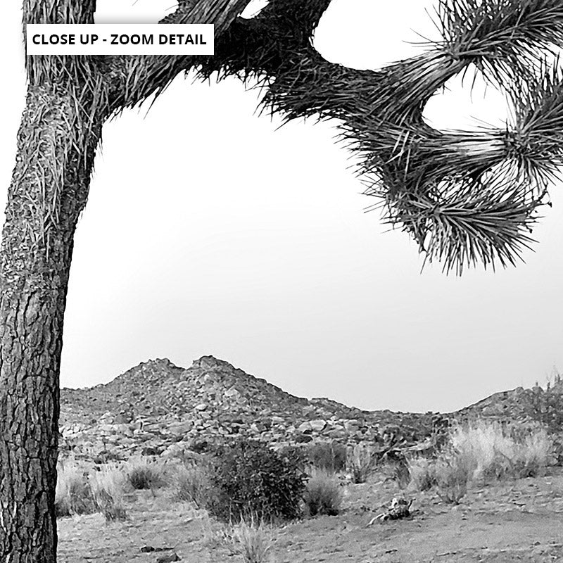 Joshua Tree Desert Landscape Black and White - Art Print, Stretched Canvas or Framed Canvas Wall Art, Close up View of Print Resolution