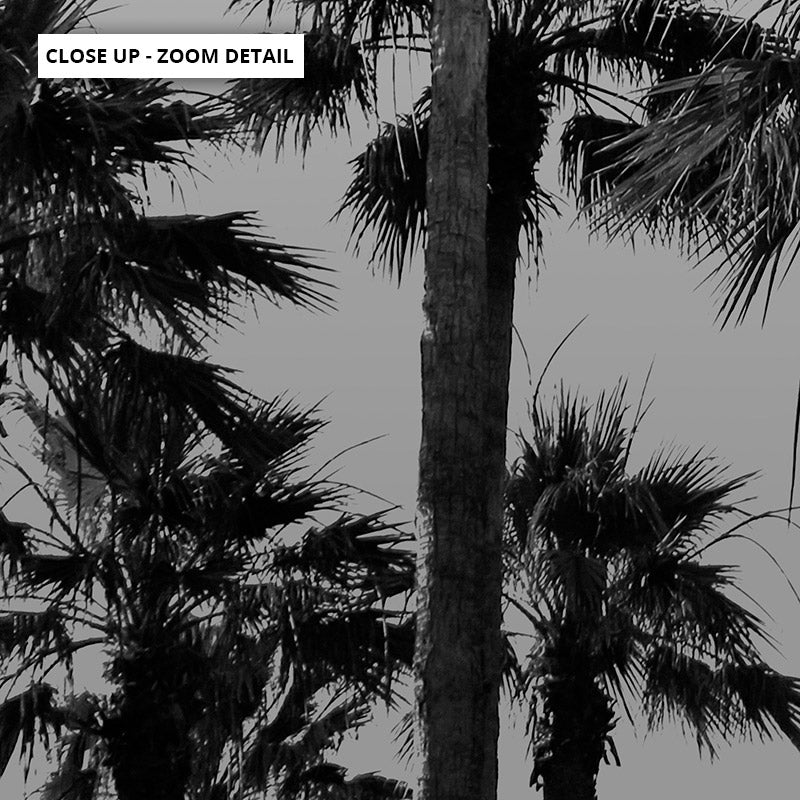 California Tropical Palms Black & White - Art Print, Stretched Canvas or Framed Canvas Wall Art, Close up View of Print Resolution