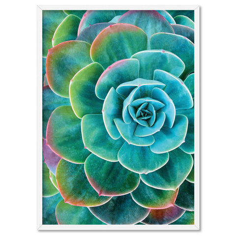Rainbow Tips Succulent - Art Print, Stretched Canvas, or Framed Canvas Wall Art