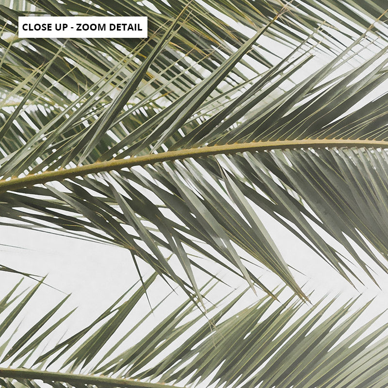 Palm fronds catching the sun - Art Print, Stretched Canvas or Framed Canvas Wall Art, Close up View of Print Resolution