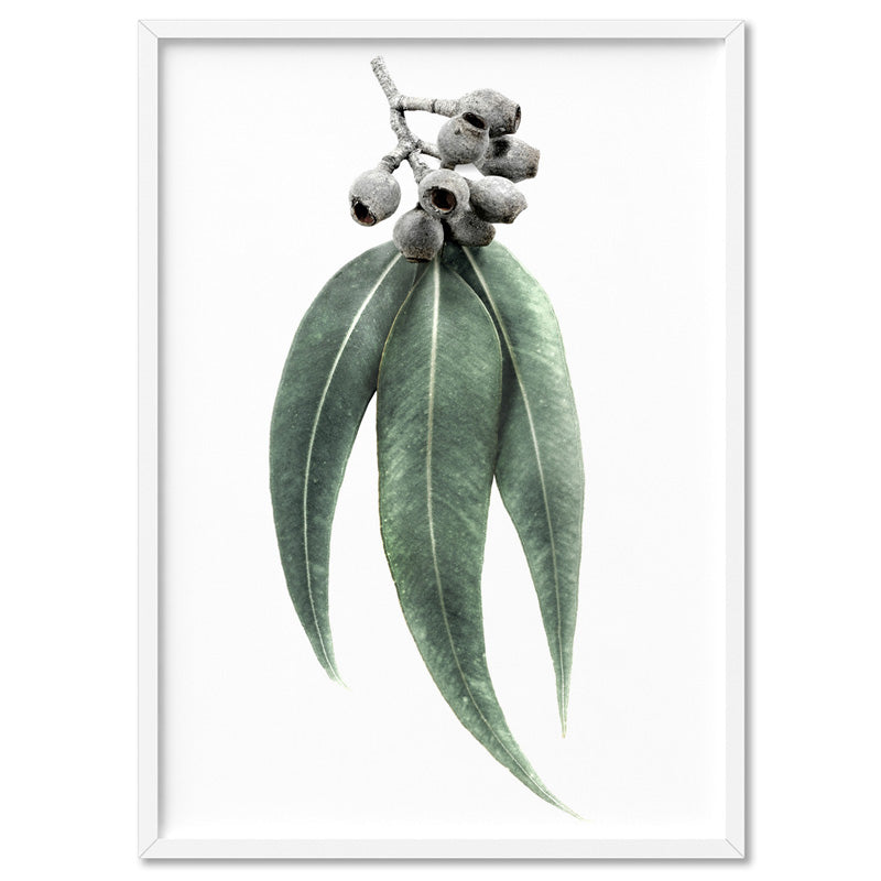 Eucalyptus Leaves & Gumnuts II - Art Print, Stretched Canvas, or Framed Canvas Wall Art