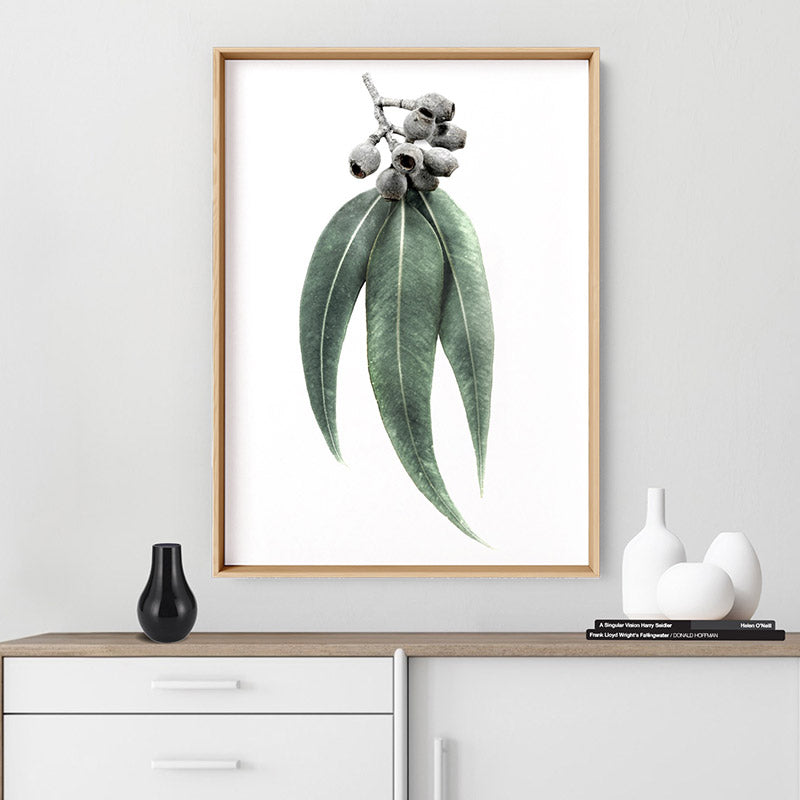 Eucalyptus Leaves & Gumnuts II - Art Print, Stretched Canvas or Framed Canvas Wall Art, Shown inside a frame