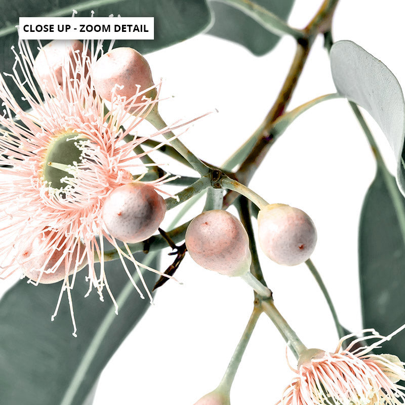 Flowering Eucalyptus in Blush - Art Print, Stretched Canvas or Framed Canvas Wall Art, Close up View of Print Resolution