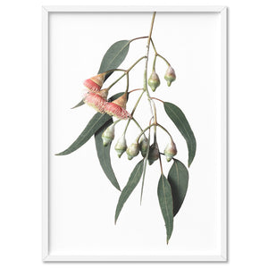 Flowering Eucalyptus in Soft Red - Art Print, Stretched Canvas, or Framed Canvas Wall Art