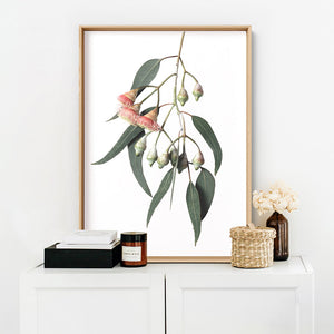 Flowering Eucalyptus in Soft Red - Art Print, Stretched Canvas or Framed Canvas Wall Art, Shown inside a frame