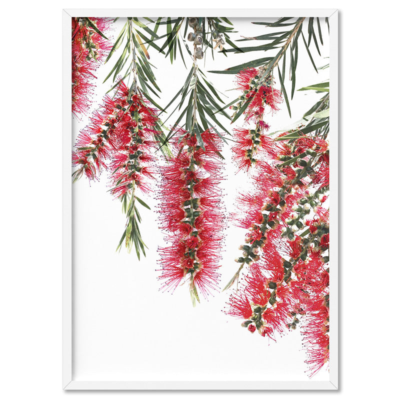 Bottle Brush Flowers I - Art Print, Stretched Canvas, or Framed Canvas Wall Art