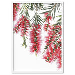 Bottle Brush Flowers I - Art Print