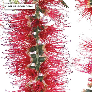 Bottle Brush Flowers I - Art Print, Stretched Canvas or Framed Canvas Wall Art, Close up View of Print Resolution