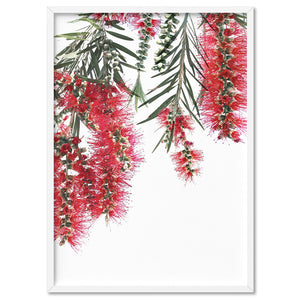Bottle Brush Flowers II - Art Print, Stretched Canvas, or Framed Canvas Wall Art