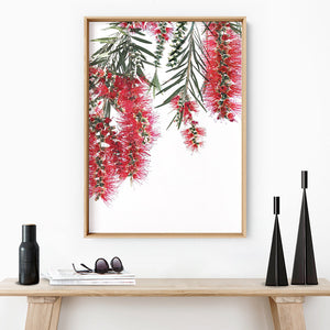 Bottle Brush Flowers II - Art Print, Stretched Canvas or Framed Canvas Wall Art, Shown inside a frame
