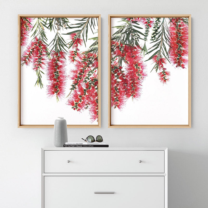 Bottle Brush Flowers II - Art Print, Stretched Canvas or Framed Canvas Wall Art, Shown framed in a room mockup