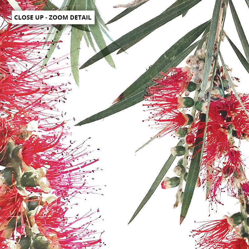 Bottle Brush Flowers II - Art Print, Stretched Canvas or Framed Canvas Wall Art, Close up View of Print Resolution