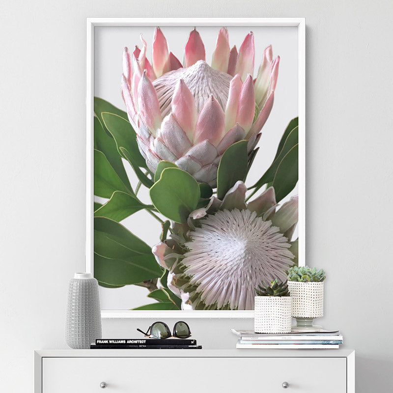 King Proteas in Soft Blush & White - Art Print, Stretched Canvas or Framed Canvas Wall Art, Shown inside a frame