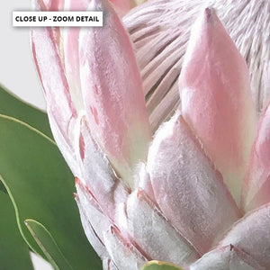 Load image into Gallery viewer, King Proteas in Soft Blush & White - Art Print, Stretched Canvas or Framed Canvas Wall Art, Shown framed in a room mockup