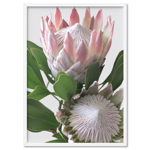 King Proteas in Soft Blush & White - Art Print, Stretched Canvas, or Framed Canvas Wall Art