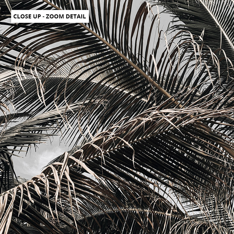 Monochrome Palm View - Art Print, Stretched Canvas or Framed Canvas Wall Art, Close up View of Print Resolution