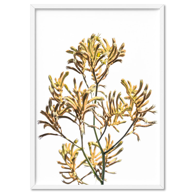 Kangaroo Paw in Yellow - Art Print