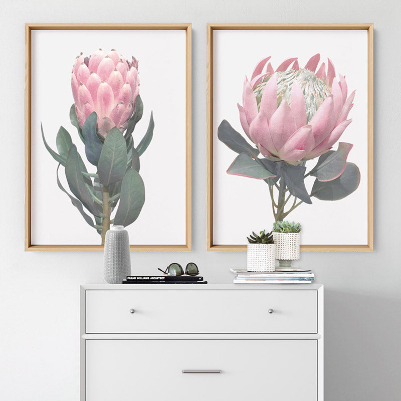 Queen Protea Vintage Portrait - Art Print, Stretched Canvas or Framed Canvas Wall Art, Shown inside a frame