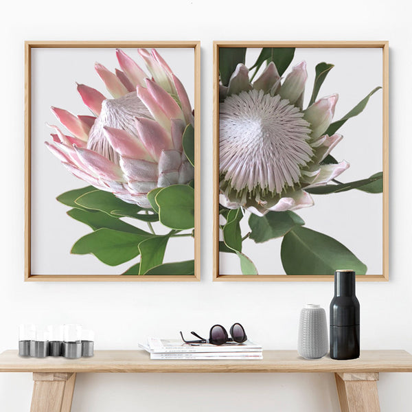 King Protea Soft Blush - Art Print, Stretched Canvas, or Framed Canvas Wall Art