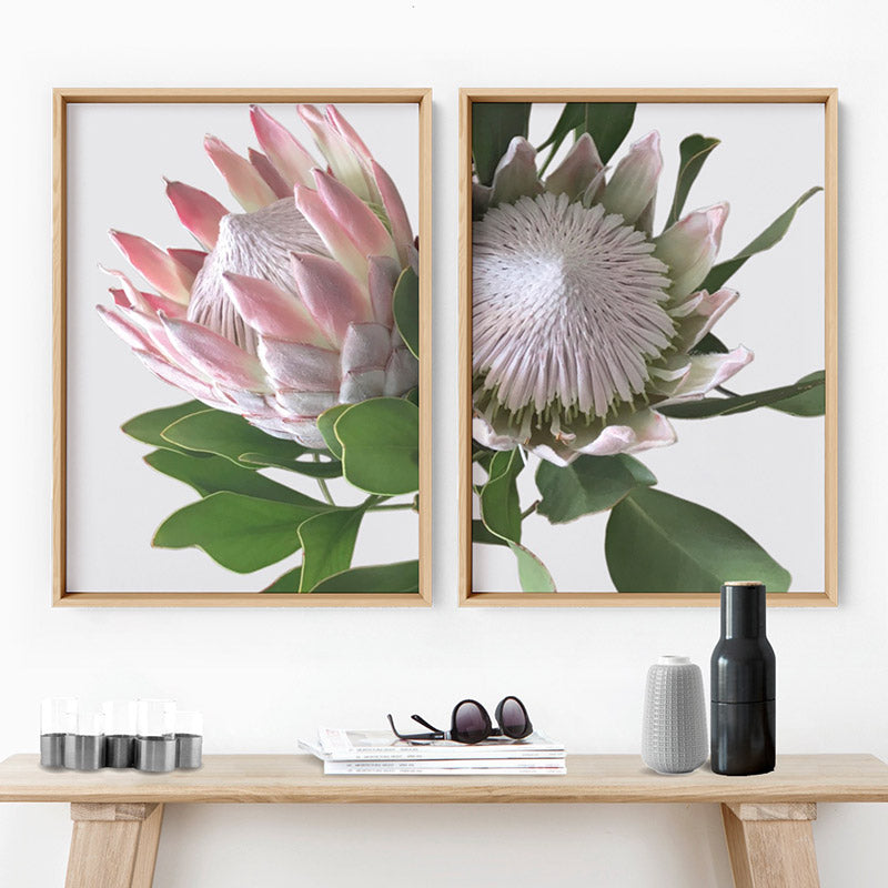 King Protea White - Art Print, Stretched Canvas, or Framed Canvas Wall Art