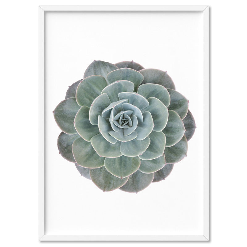 Succulent II - Art Print, Stretched Canvas, or Framed Canvas Wall Art
