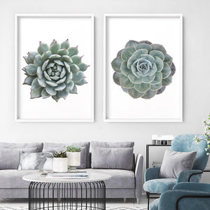 Succulent II - Art Print, Stretched Canvas or Framed Canvas Wall Art, Shown inside a frame