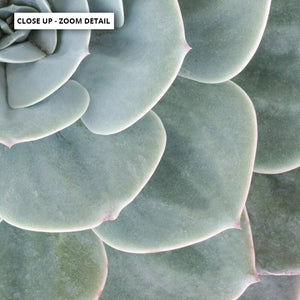 Succulent II - Art Print, Stretched Canvas or Framed Canvas Wall Art, Close up View of Print Resolution