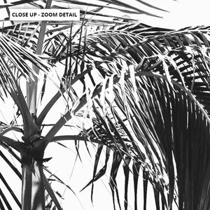 Palms Black & White - Art Print, Stretched Canvas or Framed Canvas Wall Art, Close up View of Print Resolution