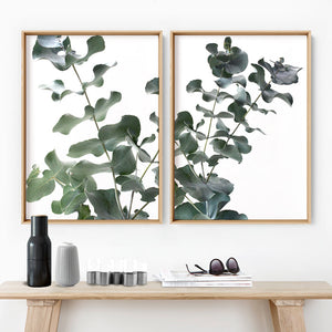 Eucalyptus Gum Leaves II  - Art Print, Stretched Canvas, or Framed Canvas Wall Art
