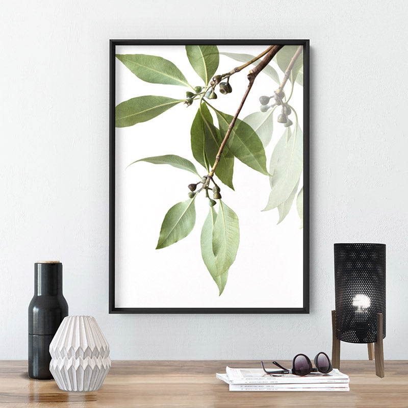 Gumtree Eucalyptus Leaves I - Art Print