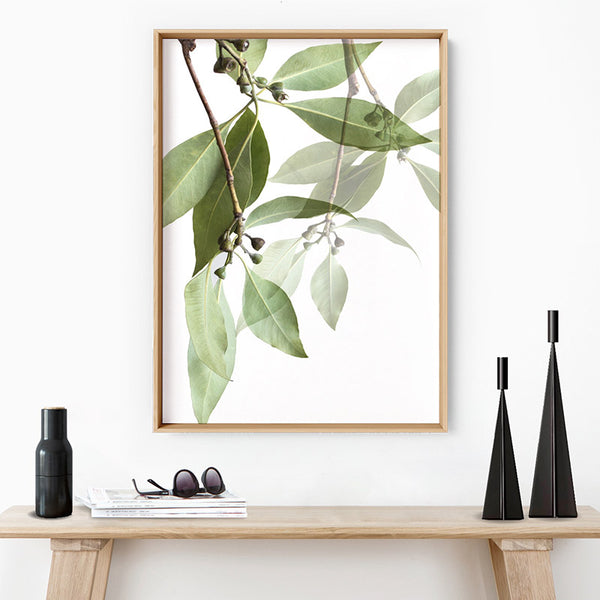 Gum Tree Leaves II - Art Print