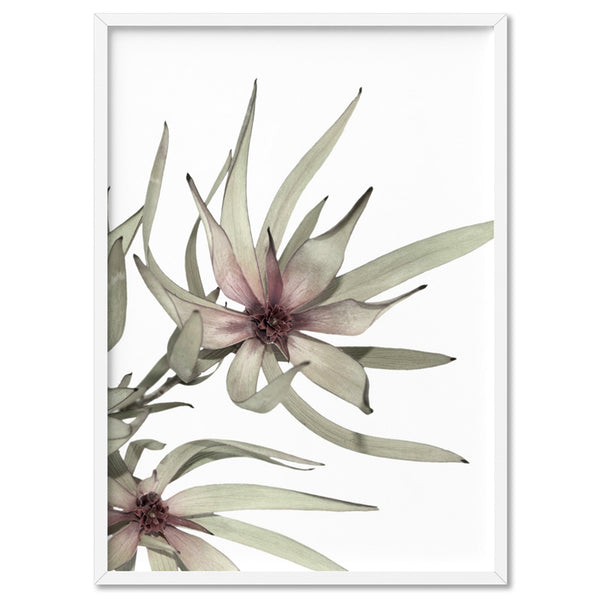 Leucadendron Dried Flowers I - Art Print