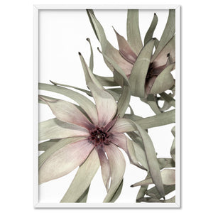 Leucadendron Dried Flowers II - Art Print, Stretched Canvas, or Framed Canvas Wall Art