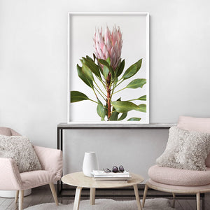 Queen Protea Portrait - Art Print