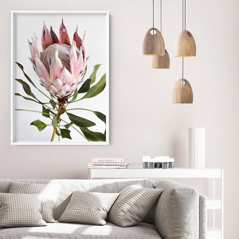 King Protea Portrait - Art Print