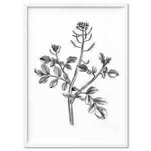 Load image into Gallery viewer, Botanical Floral Illustration I - Art Print, Stretched Canvas, or Framed Canvas Wall Art