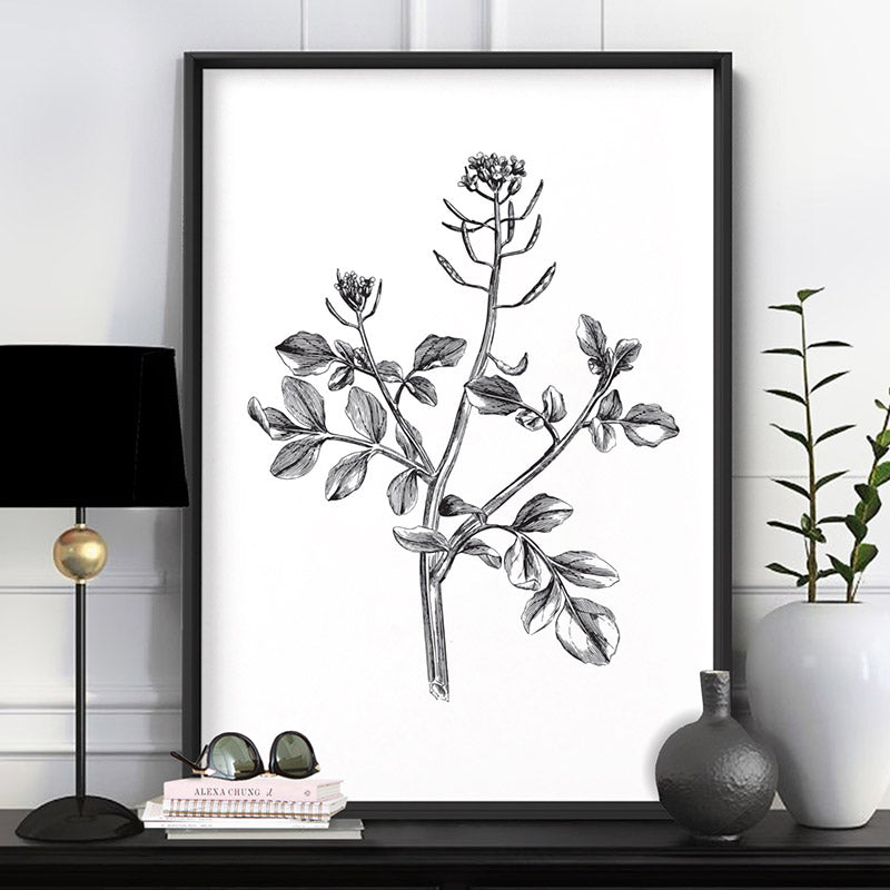 Botanical Floral Illustration I - Art Print, Stretched Canvas or Framed Canvas Wall Art, Shown inside a frame