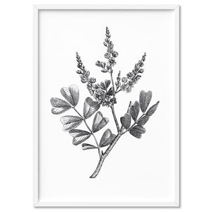 Botanical Floral Illustration III - Art Print, Stretched Canvas, or Framed Canvas Wall Art