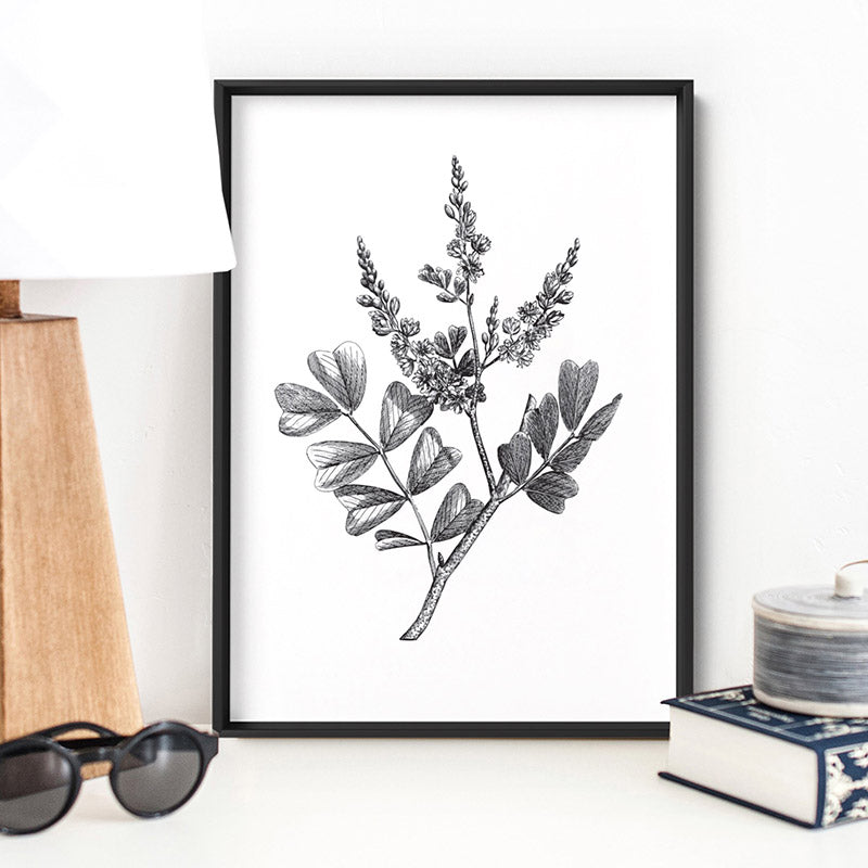 Botanical Floral Illustration III - Art Print, Stretched Canvas or Framed Canvas Wall Art, Shown inside a frame